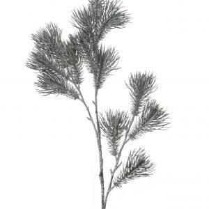 Pinustak