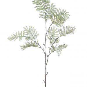 Mimosablad groen