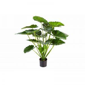 Alocasia Calidora bush