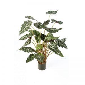 Alocasia bush met pot