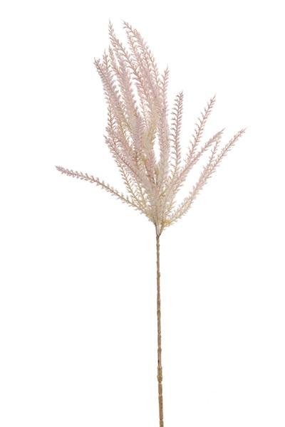 Phragmites roze