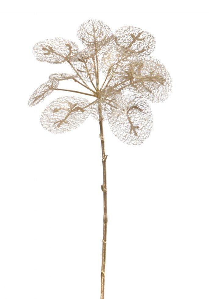 Pannenkoekplant goud