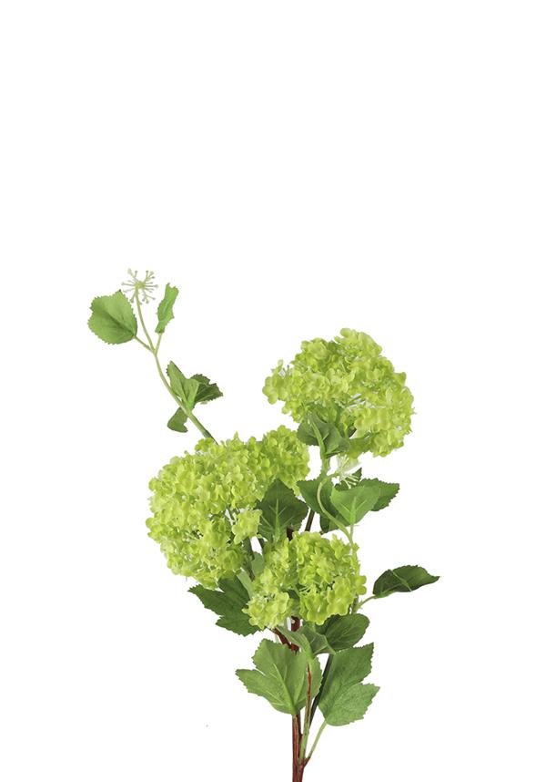 Viburnum Groen