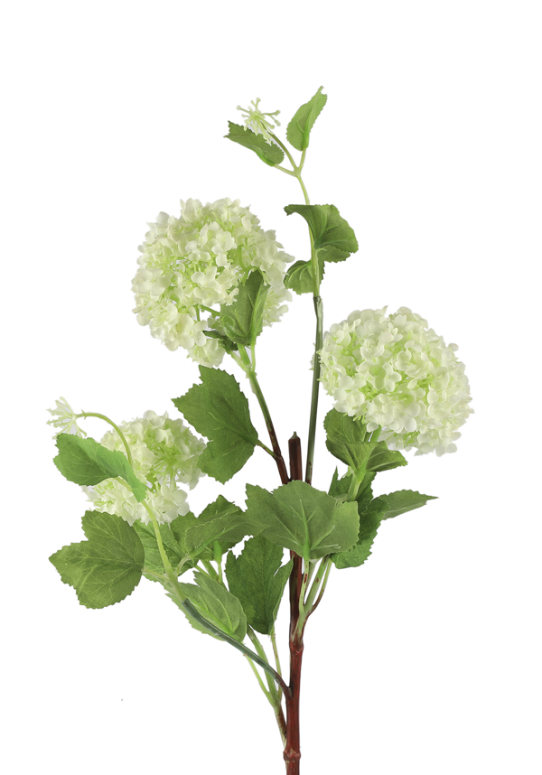 Viburnum wit