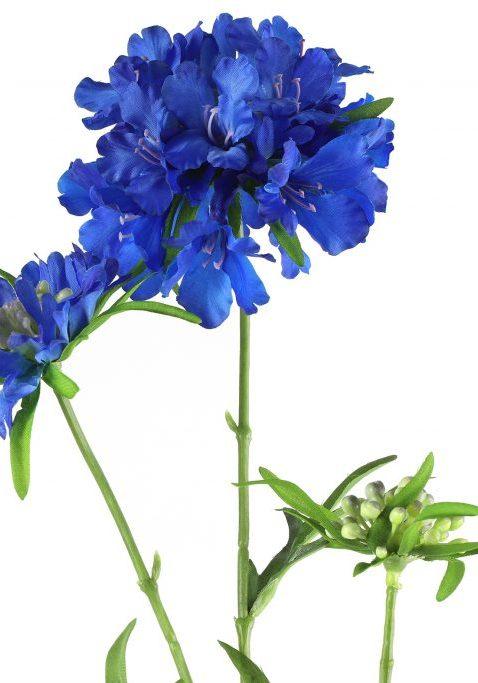 Scabiosa Blauw