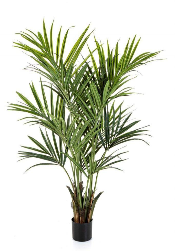 Kentia palm de luxe
